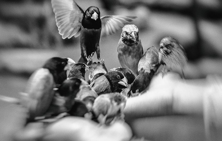 guvercin2 - Güvercin ve kuş beslemede çalışanlar!