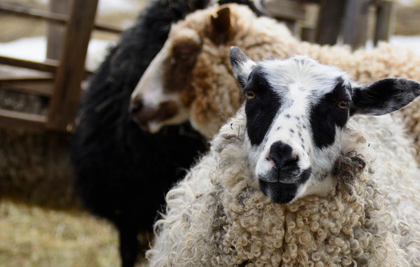 hayvan3 - Hayvan bakım işlerinde çalışanlar!