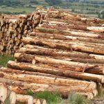 orman urunleri3 150x150 - Marangoz ve doğrama işlerinde çalışanlar!