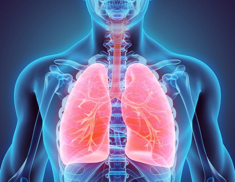 lungs 2 1 2048x - Mesleki akciğer hastalıkları