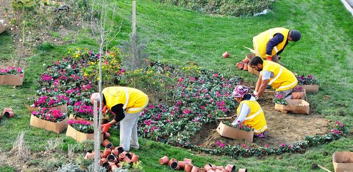 bahce iscisi - Bahçe işçilerinin meslek hastalığı: Lejyoner hastalığı