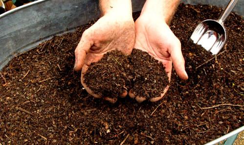 kompost - Bahçe işçilerinin meslek hastalığı: Lejyoner hastalığı