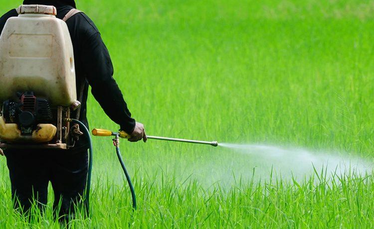 pestisit1 - TARIM İŞÇİLERİNDE PESTİSİT MARUZİYETİ