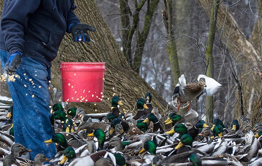 guvercin1 - العاملون في رعاية الطيور!